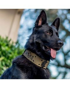 Tactical M1-K9 Dog Collar and Leash